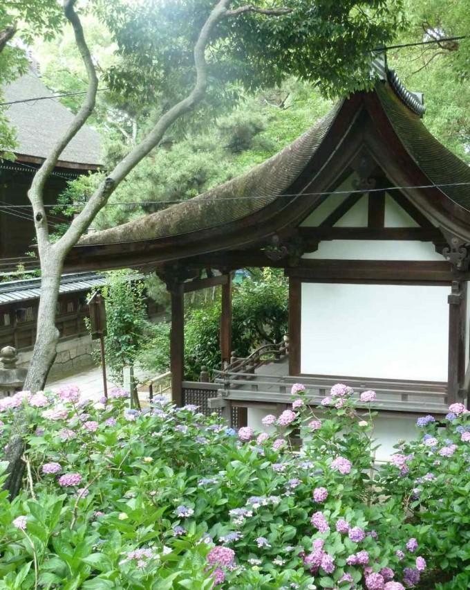 紫陽花苑(京都・藤森神社)